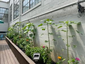 Photo of an outdoor garden